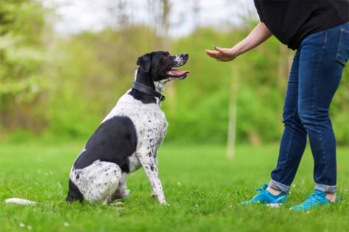 How to Training a Dog