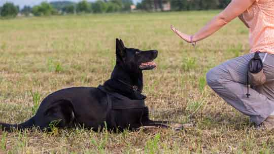 The best ways for training a dog