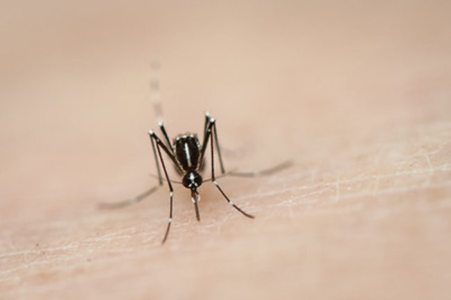 How to Kill a Mosquito in your Room