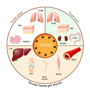 Natural remedies for mercury detoxification